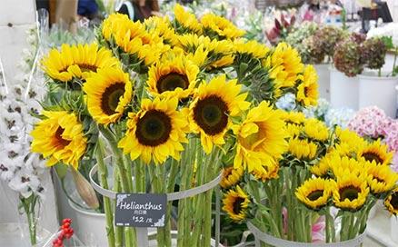 brighten_flower-bis-438x272.jpg